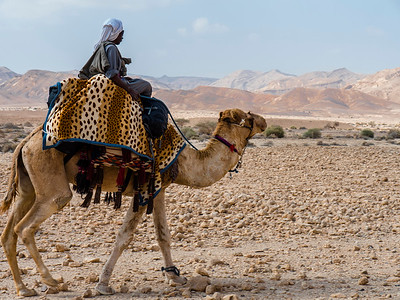 2017 DESERT MUSIC  ----  Four days of music and desert wandering with Yair Dalal and friends on a Bedouin camel caravan on the ancient Spice Trail - from the Nabatean Moa in the Arava to Machtesh Ramon