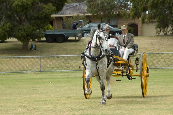 Rosebud Pet & Pony - Gallery 4 - Heavy Horses