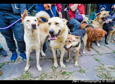 20200127 - Tai Tong Trail Dogs