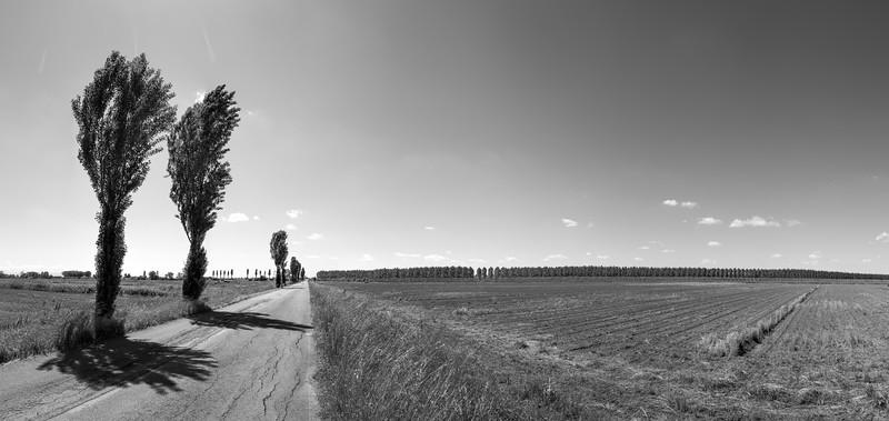Trees - Crevalcore, Bologna, Italy - May13, 2013