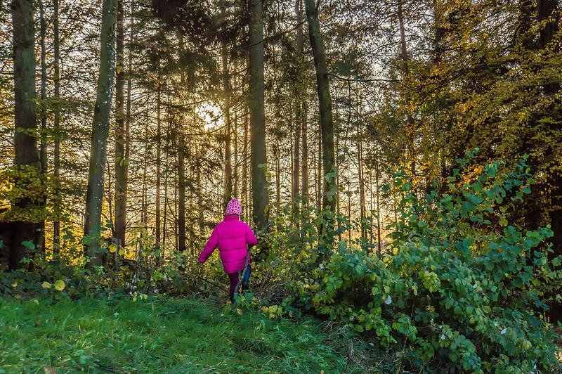 Wald | Forest, Türlersee