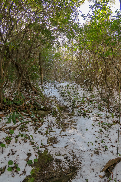 Green Knob Trail -- 3,900'
