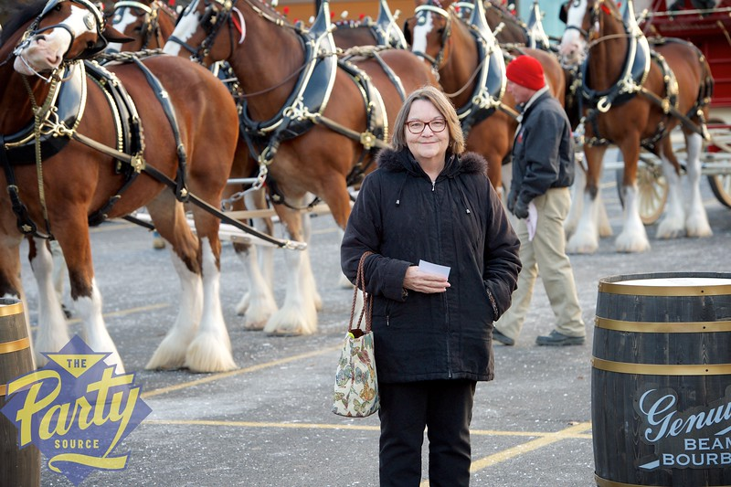 Clydesdale Portraits 293.jpg