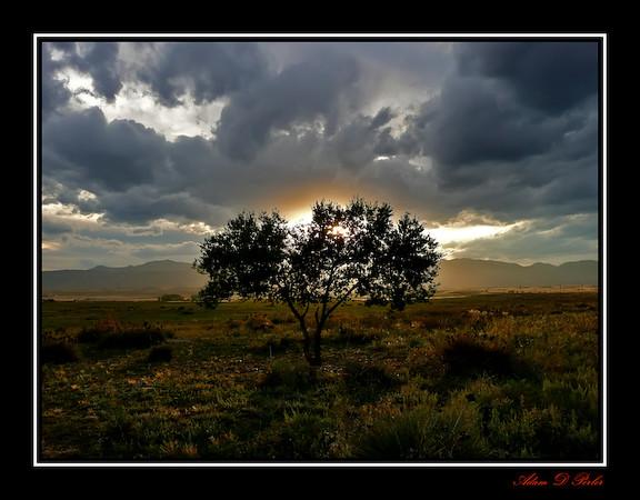 Colorado Tree Sunset