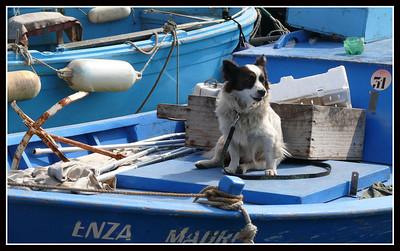 Ischia Isle - Ischia porto (2007)