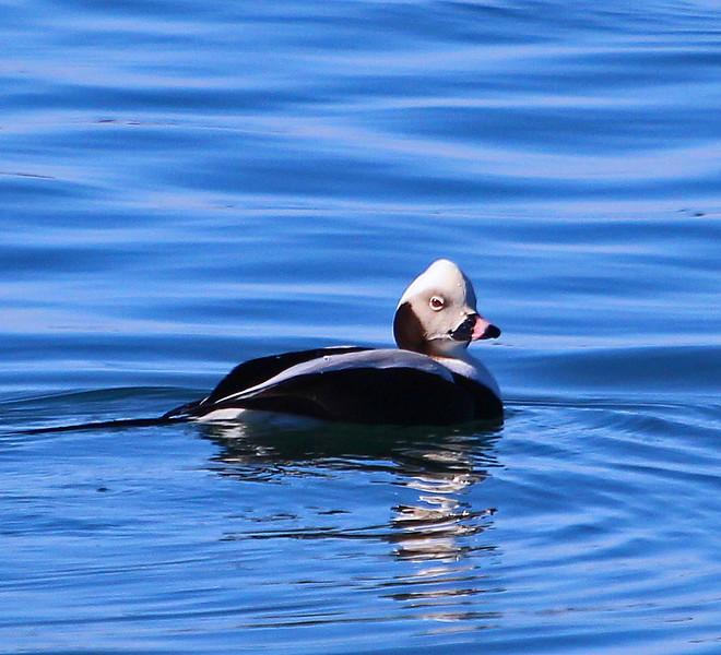 duck 3-15.jpg