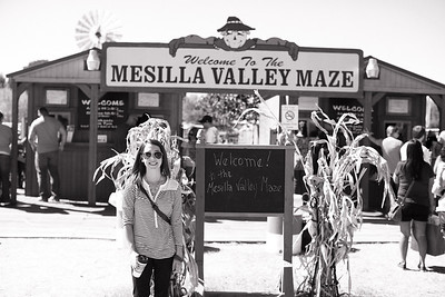 Corn Maze and Pumpkin Patch | 2013