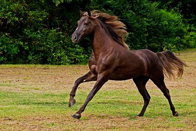 ACCO Lightbox Gallery: Horses