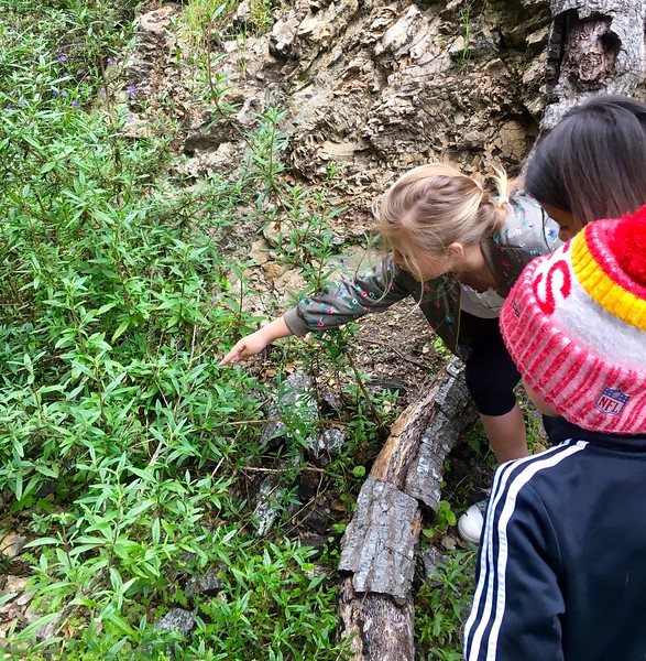 "Ocean View Oak Ambassadors guide ""Animals and Oaks Through Time"" hike for Mr. Danielson's 3rd grade class"