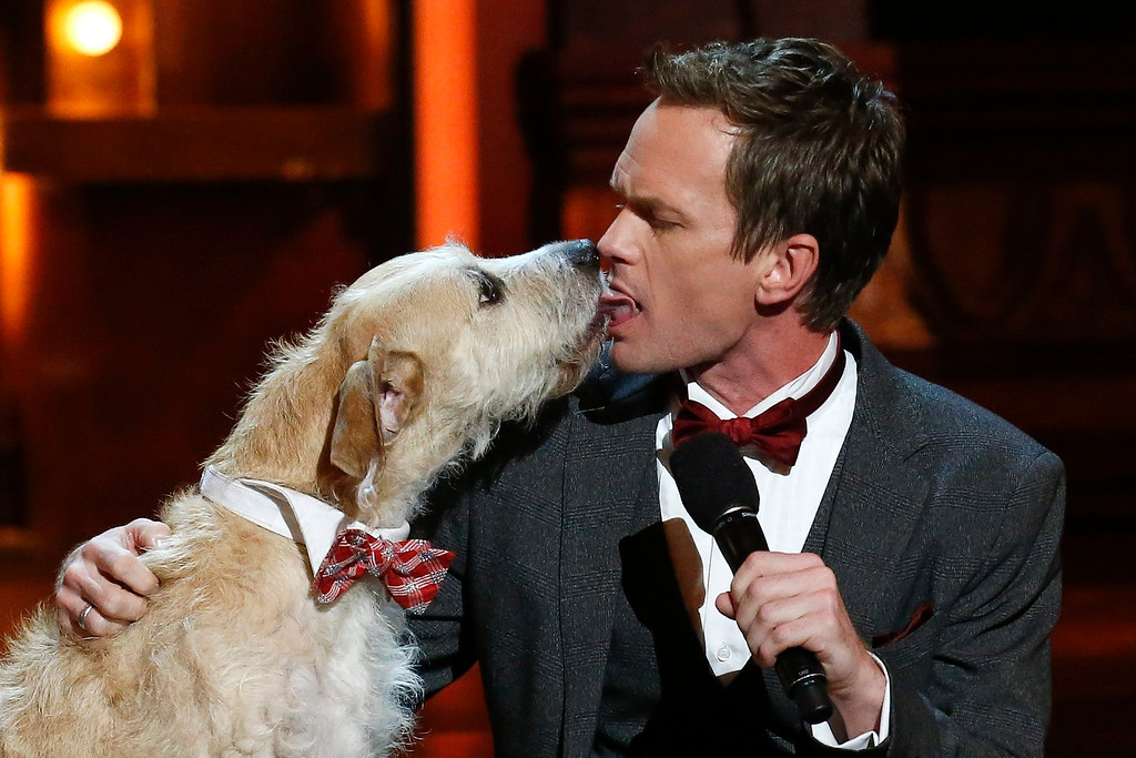 ". Host Neil Patrick Harris licks the dog from ""Annie\"" on stage during the American Theatre Wing\'s annual Tony Awards in New York June 9, 2013. REUTERS/Lucas Jackson"