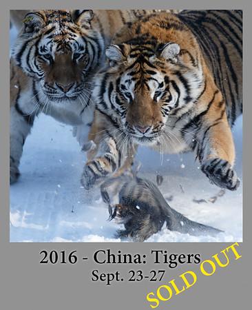 09-23-2016 China Siberian Tigers