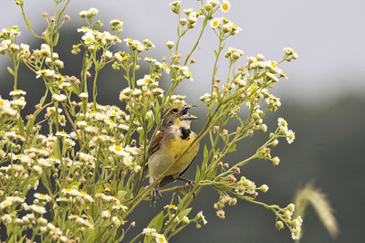 Birds too.Warblers and other migratory small birds
