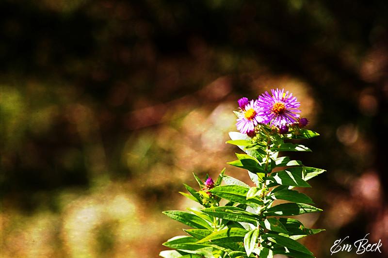 purplecrowns.jpg