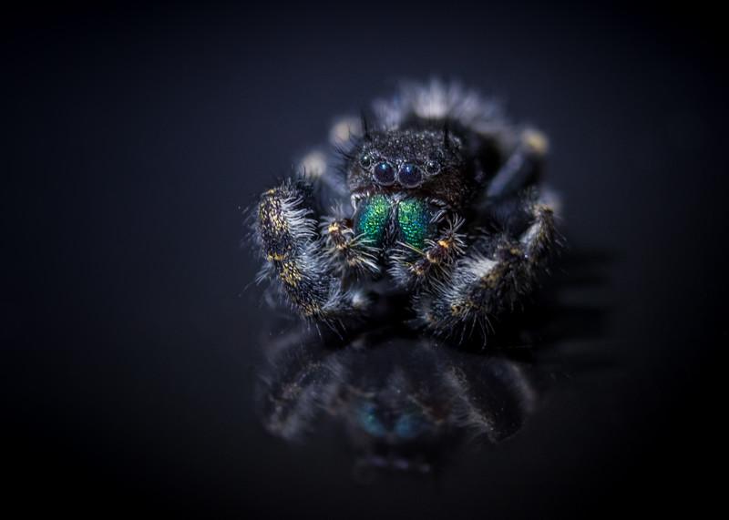 spider macro  (1 of 1).jpg