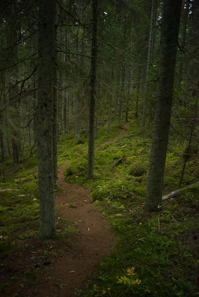 Woods_Finland-7.jpg