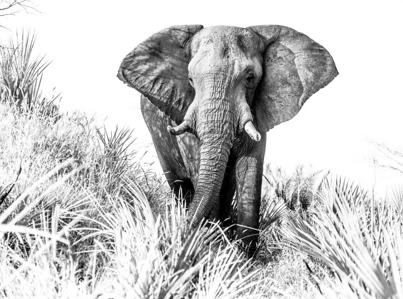 Botswana_DSC02013.jpg