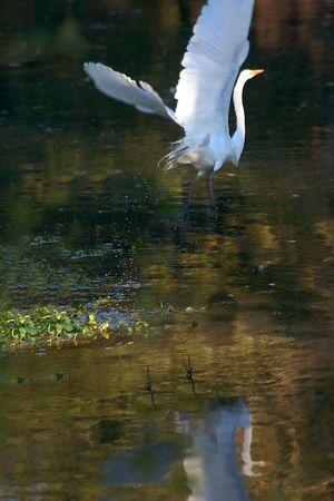 Cottingham Drive Birds