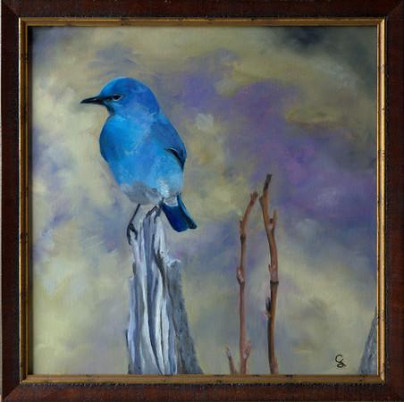 RMNP BLUEBIRD