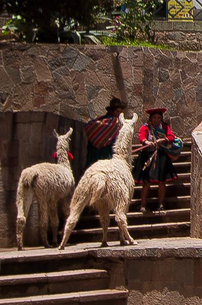 cusco-llama_5533110550_o.jpg