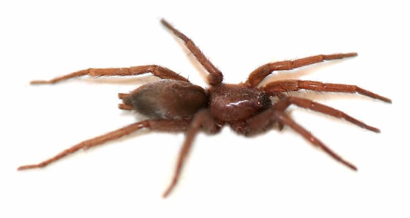 7168 Bathroom Spider clean.jpg