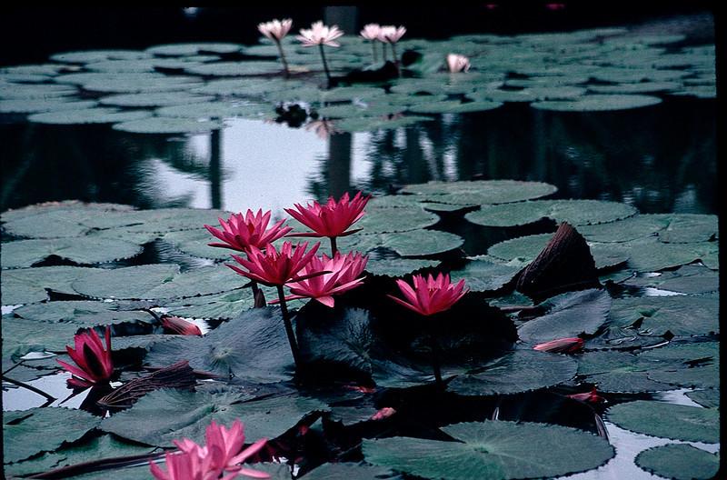 LaosCanada1_021.jpg