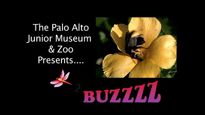 "Video -- ""Buzzzz"" at the Palo Alto Junior Museum & Zoo"