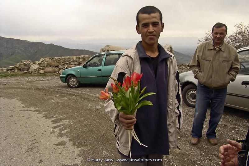 Tulip collecter