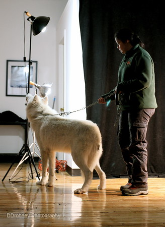 Atka comes to Spirit Gallery