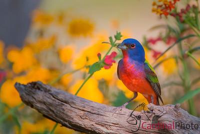 Texas bird photo safaris 2014
