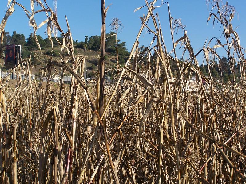 06-01-13_So_Much_Not_Corn-039.jpg