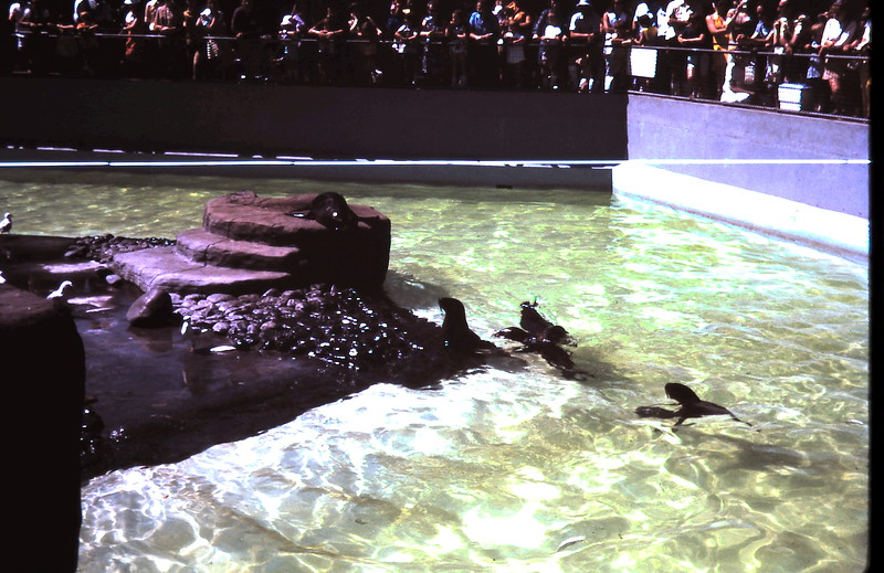 1972-1-30 (20) @ the Zoo.JPG