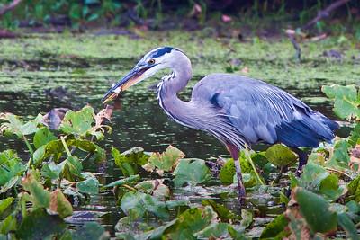 J. Heinz Bird Sancuary 2011-08