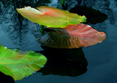 Greeting Card and Fine Art Enlargements,  Photography,Lexington Kentucky Photographer -