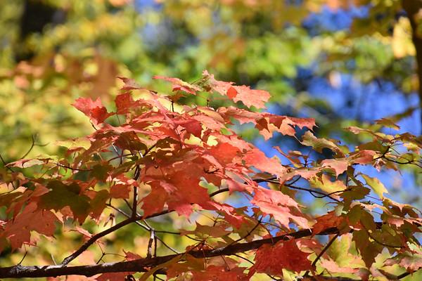 Autumn Splendour in Edwards Gardens (October 2017)