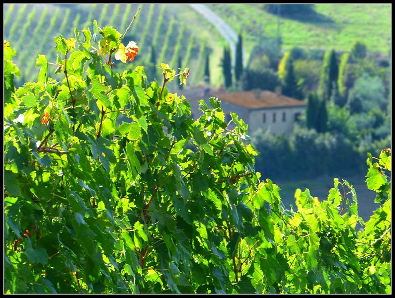 2014-09 Castelnuovo Cecina 47.jpg