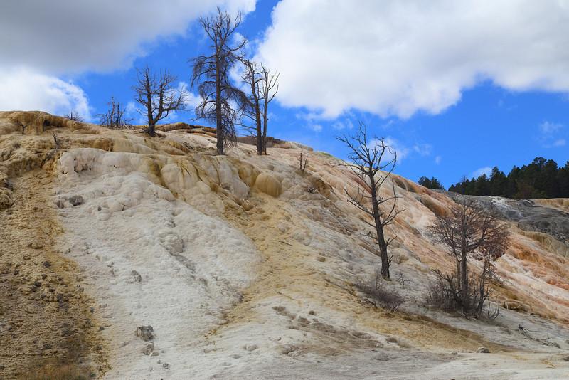 Yellowstone 117.JPG