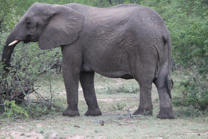 Africa Trip 2012 358.jpg