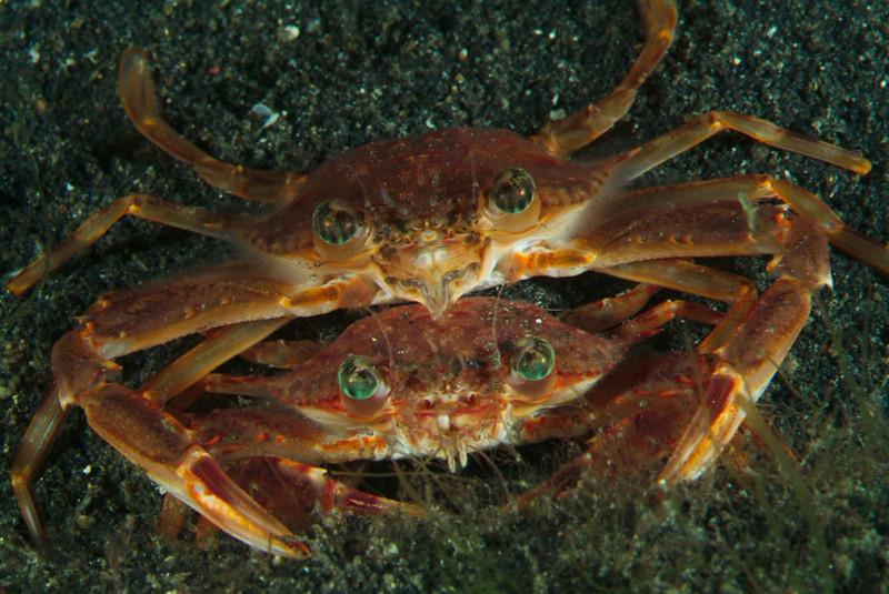 crab love1.jpg