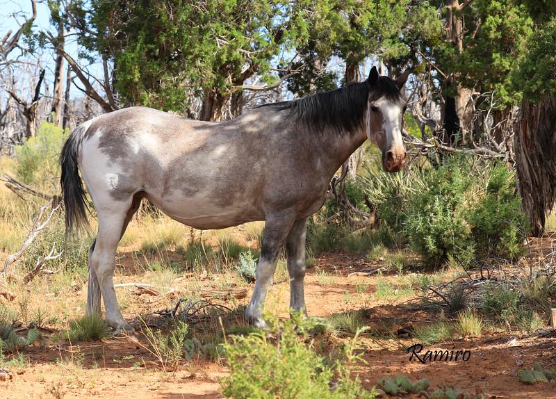 Wild Horse IMG_5349.jpg