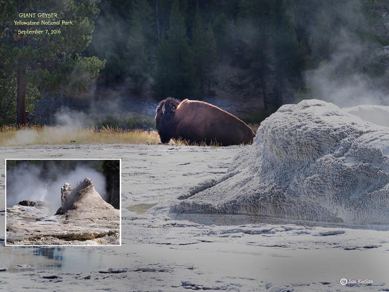 9.7.16 Giant Geyser bison .jpg