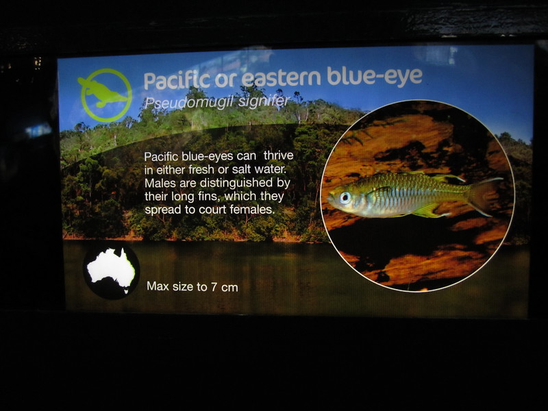 Sydney - Sydney Aquarium-18.JPG