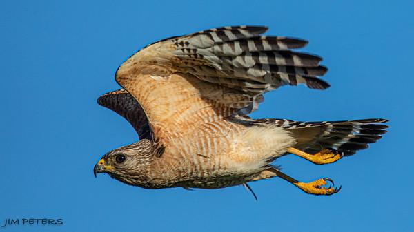Birds of Central Florida 2020 - Click to Open
