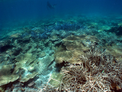 Ebiil (Reef Flat) - 2/19/10