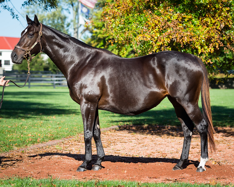 Concinnous at Gainesway 10.17.14