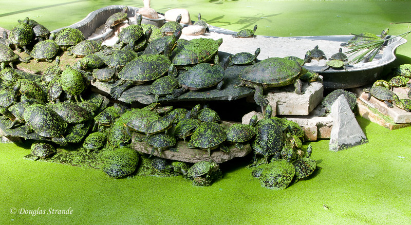 Mon 3/07 in Madrid: Turtle pond inside Atocha Station