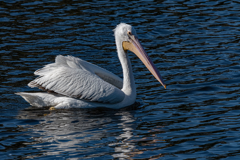 Gleason Park & Bald Eagle Nest BE994 - January 19, 2021