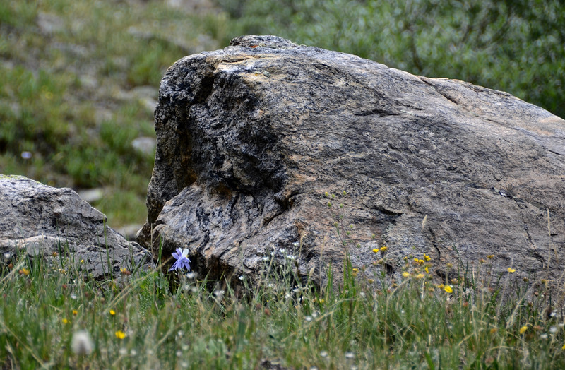 What can you see in this rock?
