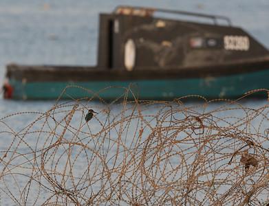 Kuningaskalastajat (Kingfishers)