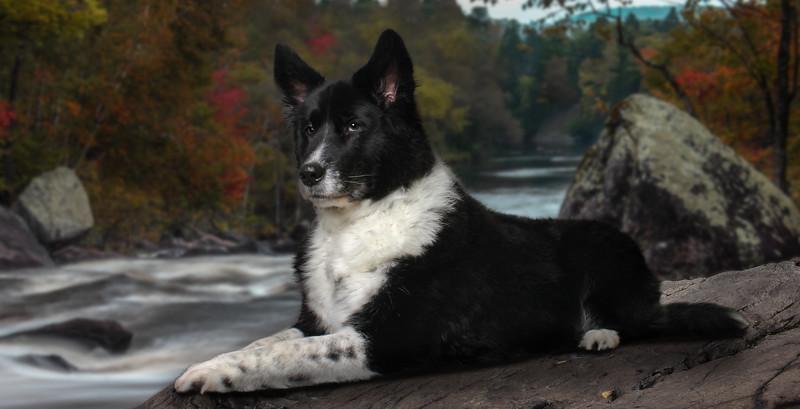 dogpsb-river.jpg