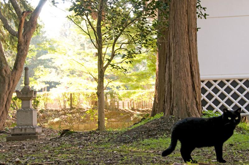 Japan_2010_NAT0388.jpg